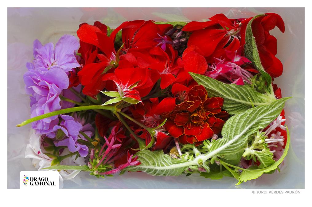 Flores © Jordi Verdés Padrón